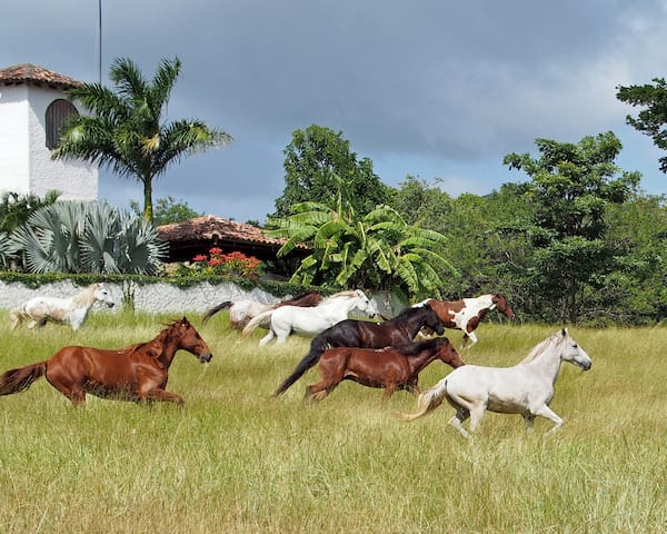 Cold Beer, Horses, Breakfast & Dinner at the Ranch - San Juan del Sur - Villa