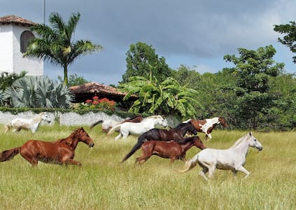 Cold Beer, Horses, Breakfast & Dinner at the Ranch - San Juan del Sur