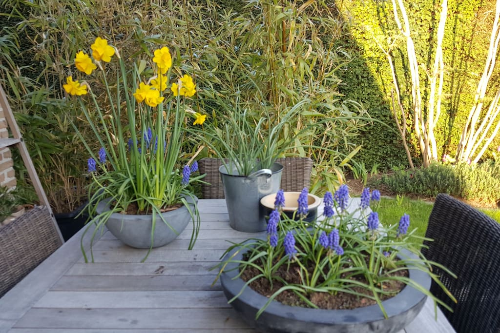 Een zonneterras vol bloemen
