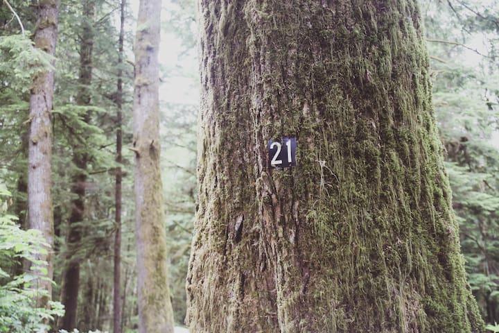 Campsite #21 · Forest Campsite