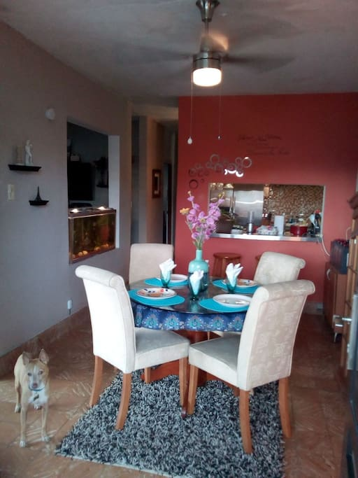 Dinning Room with my dog - Comedor con mi perrito