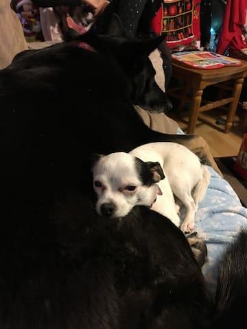 Daisy and Cheba are sisters at heart.
