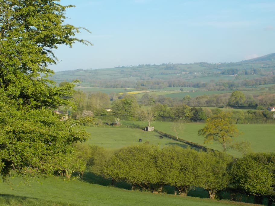 View looking across our land from the edge of our woodland