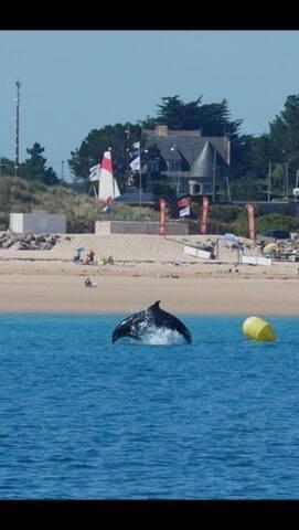 La visite des dauphins sur la plage des Sables d'or