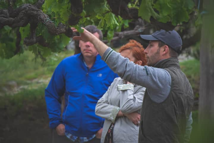 Talking about our vineyard's history