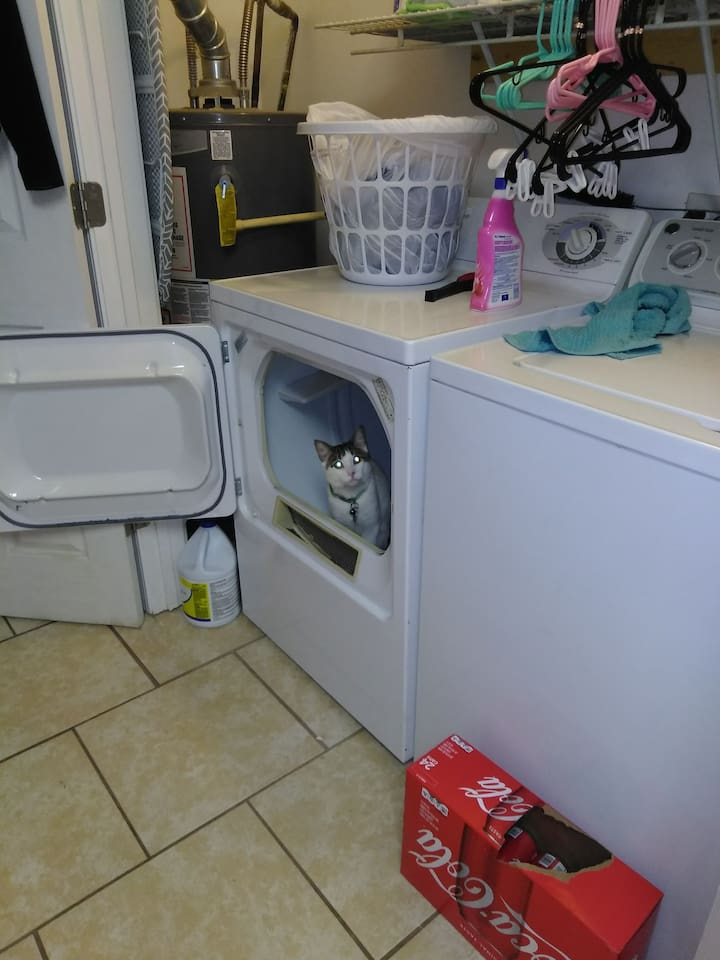 Washer dryer.  And guard cat