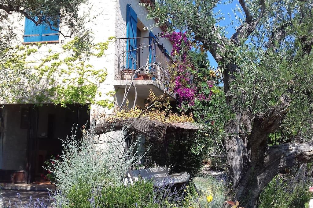 Dans un terrain en terrasses entourée par des oliviers, une maison authentique à vivre dans la fraîcheur à l'intérieur, à l'ombre de la pergola, ou dans la piscine !... Le rêve !