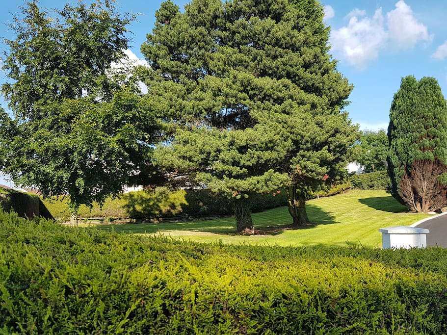 Mature trees in the spacious garden.