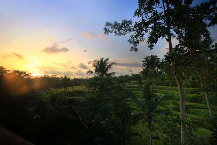 The Sunset House with rice field view