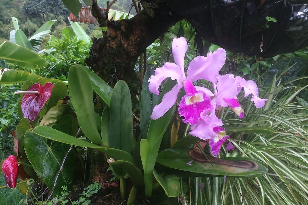 Variedad de flora