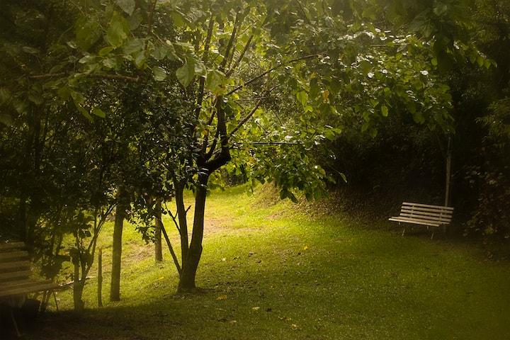 Alugamos nossa casa no meio da floresta
