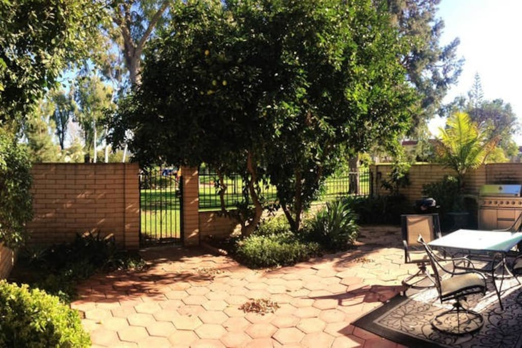 Backyard: Lemon and Orange Tree, Large Grill, Outdoor Seating