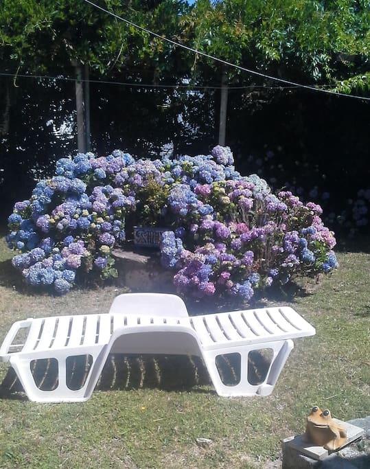 Amplio jardín con reposeras y sombrillas a disposición en un entorno de árboles, pérgolas y flores.