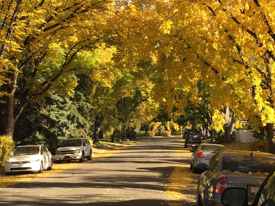 On our street in the fall