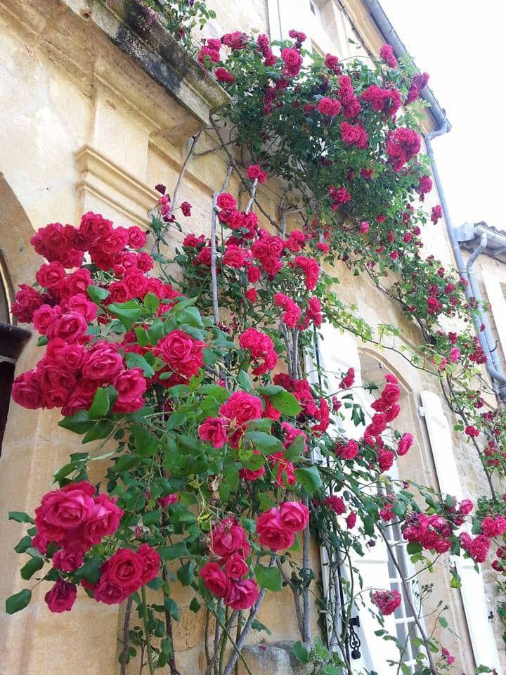 Sous les Acacias, St.Geniès,Dordogne,Périgord-Noir