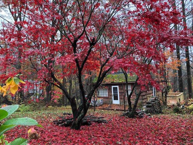 Red Maple Cabin 1bed - no pets DanburyNewFairfield
