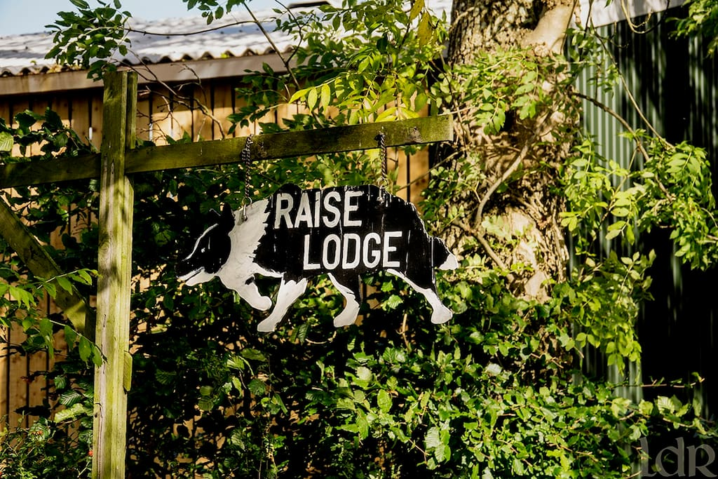 Raise Lodge is a working sheep farm that specialises in training working sheepdogs.