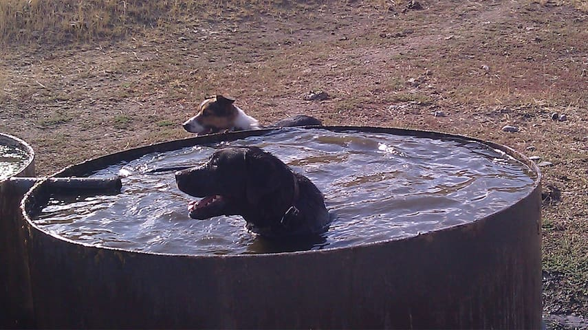 dogs enjoying the water tub