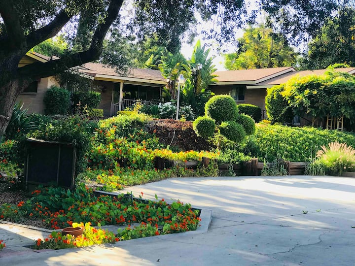 Nice cozy room-Nixon  Library Disney -Paradise1