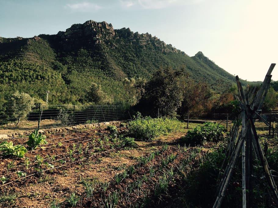 Masia parque natural casas en alquiler en benicasim - Casas alquiler benicasim ...