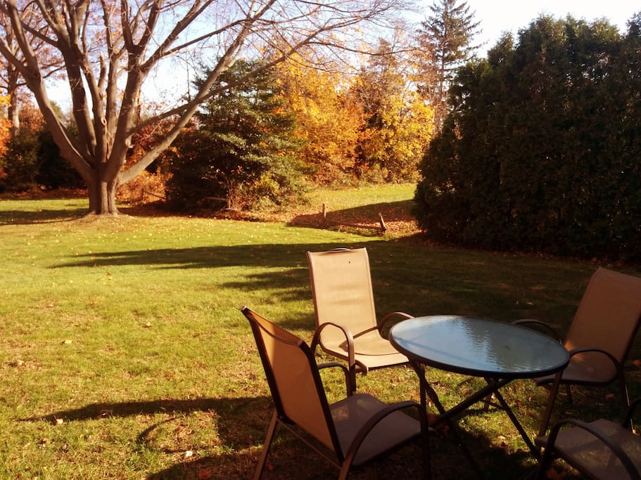 Just part of the backyard... fall sun!
