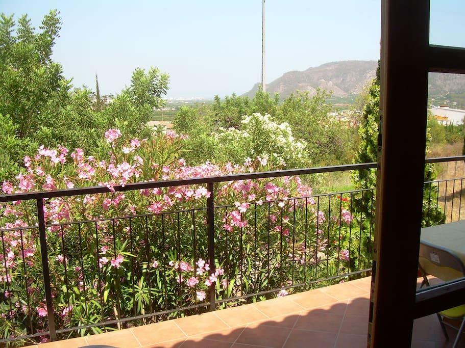 Casas de madera en parcela de 33000m caba as en alquiler for Cabanas en los arboles comunidad valenciana