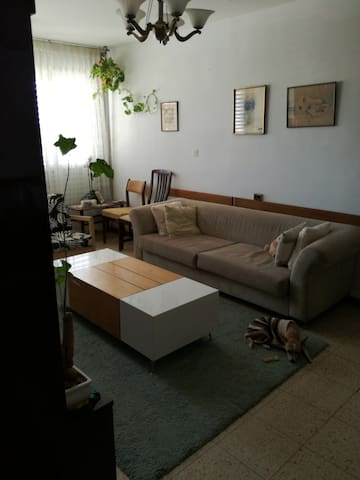 Cozy sofa for budget travellers