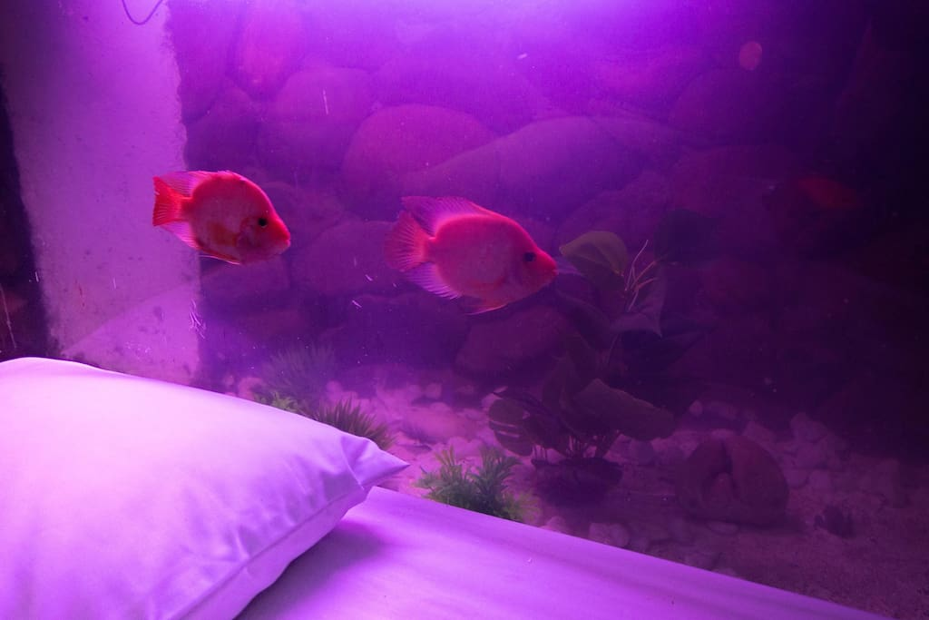 unique fish tank right beside the mainbed