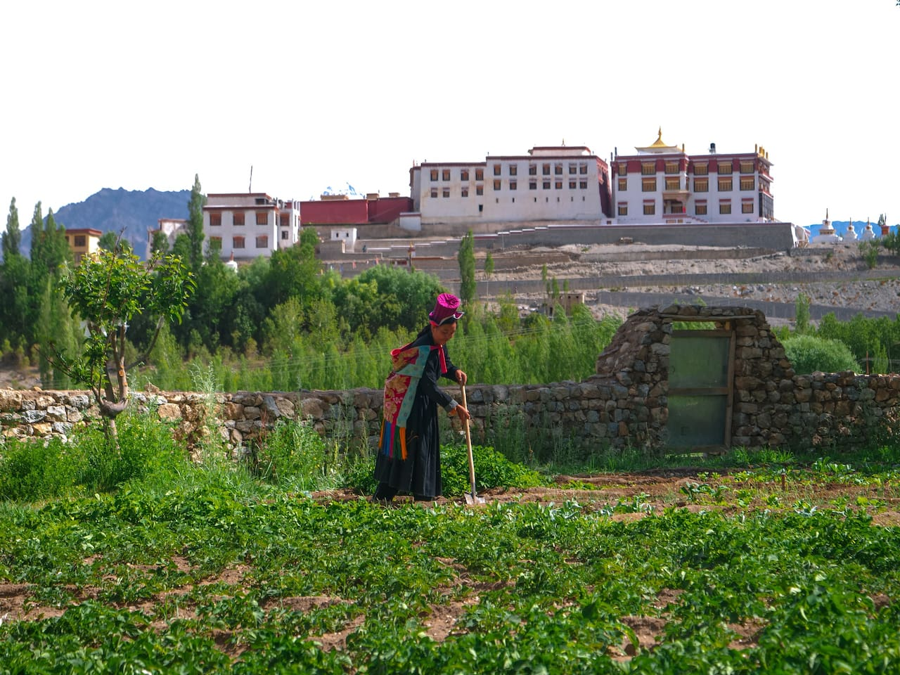 Farmstay Amaley tending to her vegetable garden overlooking the Phyang Monastery.