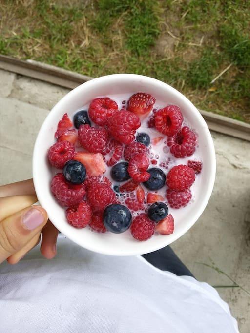 frutos rojos y la posibilidad de cosecharlos tu mismo