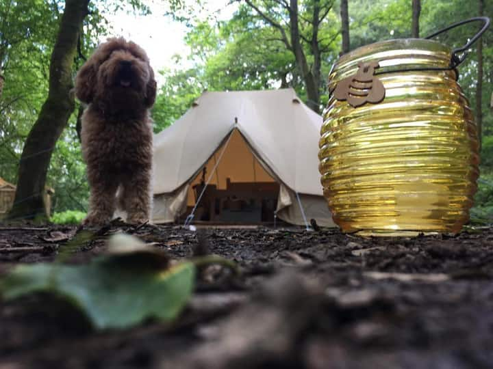 Secluded, Woodland Glamping The Peak District