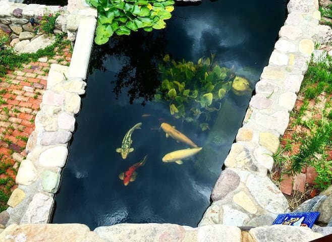 Sunny, Historic Home with Koi Ponds & Waterfalls - Bisbee - Apartament