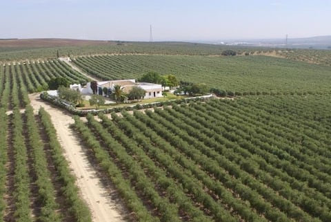 Casablanca: Descanso entre olivos