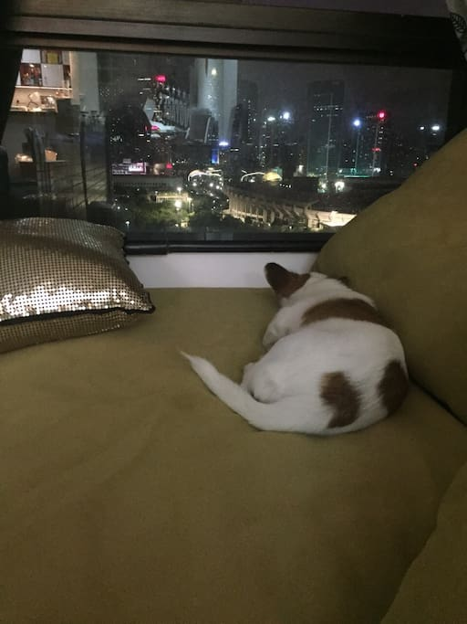 zaya经常在窗边看夜景