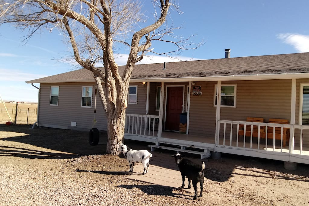 farm room for large animals to run 420 friendly houses for rent in calhan colorado united