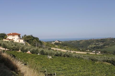 Appartamento tra le vigne