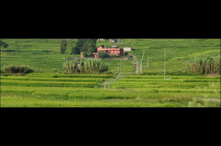 The Whole House in the ricefields