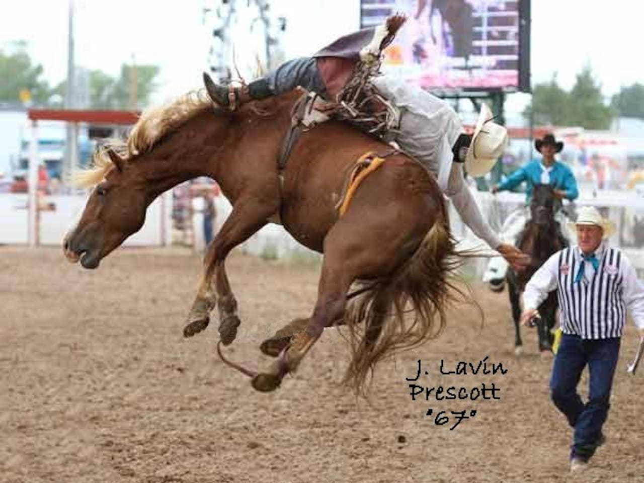 An exciting shot of a real bronc riding cowboy.