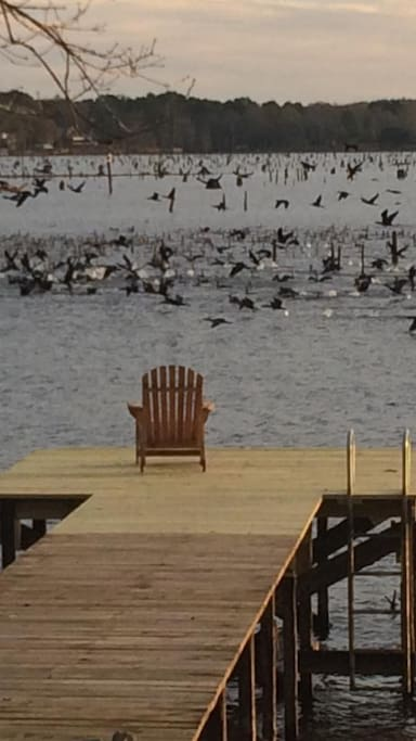 In this photo, the lake is in drawdown which attracts thousands upon thousands of migratory birds: ducks and pelicans.  It's amazing!  Nature viewing at it's best!