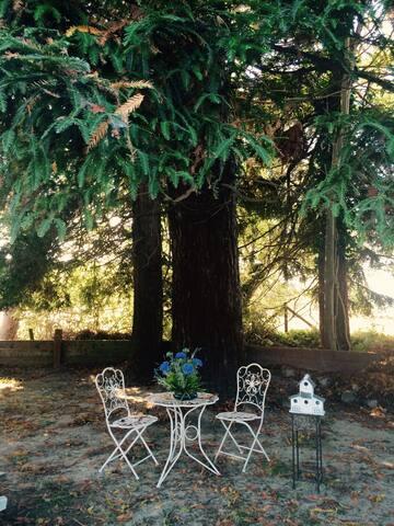❤️Cottage in the Redwoods! ★WALK TO VILLAGE!★ YARD