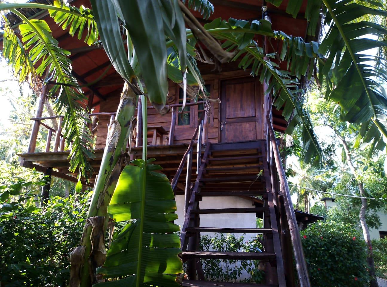 sigiriya charuka resort Tree House