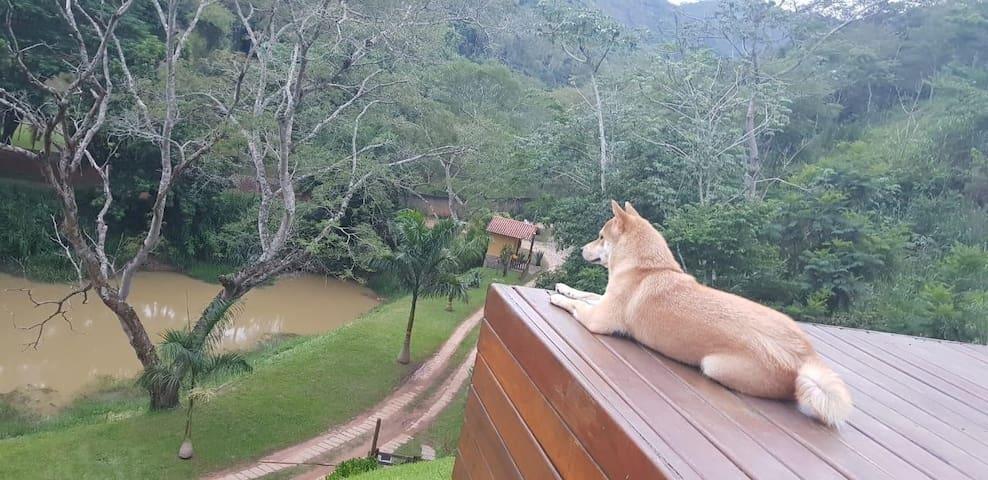 Cachorro dos hóspedes curtindo a vista no Deck da piscina!!
