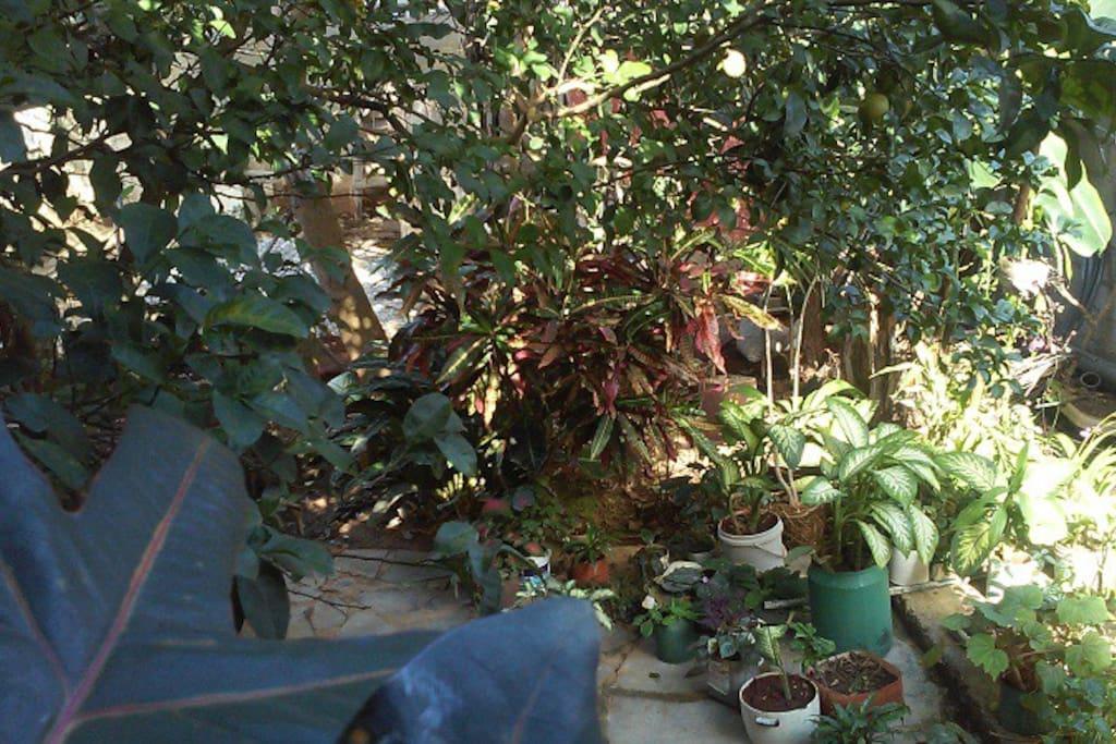 jardin de la casa