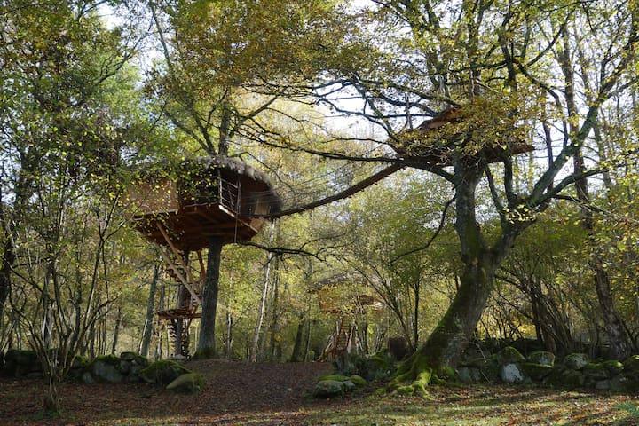 Cabane La Pitalaya, perchée à 7m, nuit romantique - Cazarilh - Tretopphus