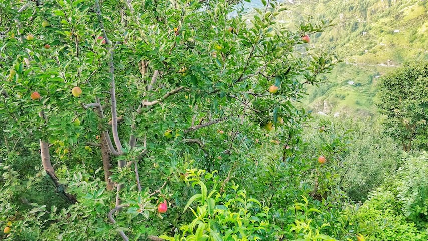 Blissful experience in apple farms