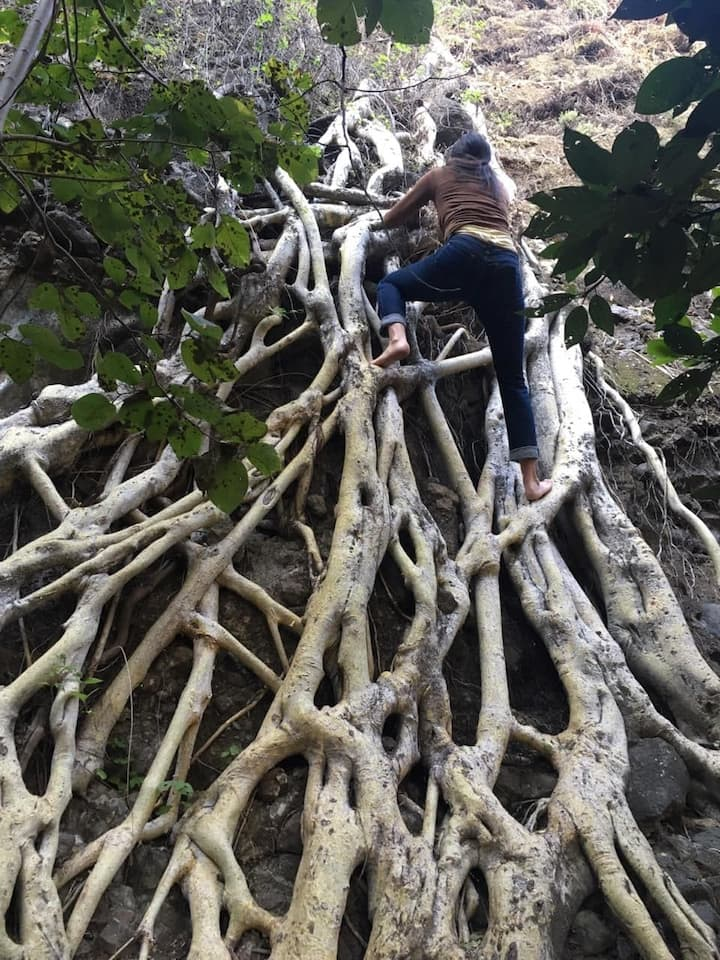 climbing up the Amate tree