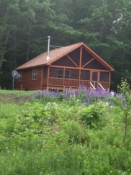 Cabin in summer with the large lupine field.