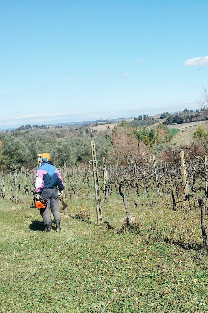 The vineyard in February