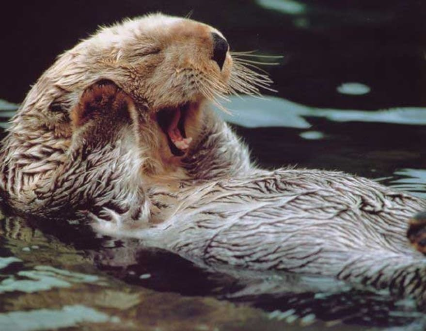 Nature's Paradise has sea otter families that play in front of our home.