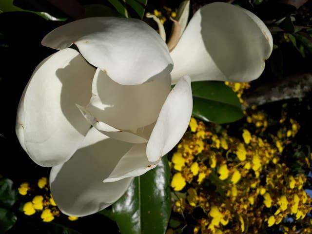 Quinta La Magnolia ,vive simple, sueña grande